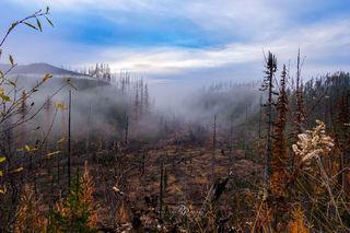 Montana, forest fire,
