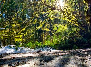 Oswald State Park, Oregon,