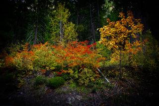 Washington, Leavenworth, fall,