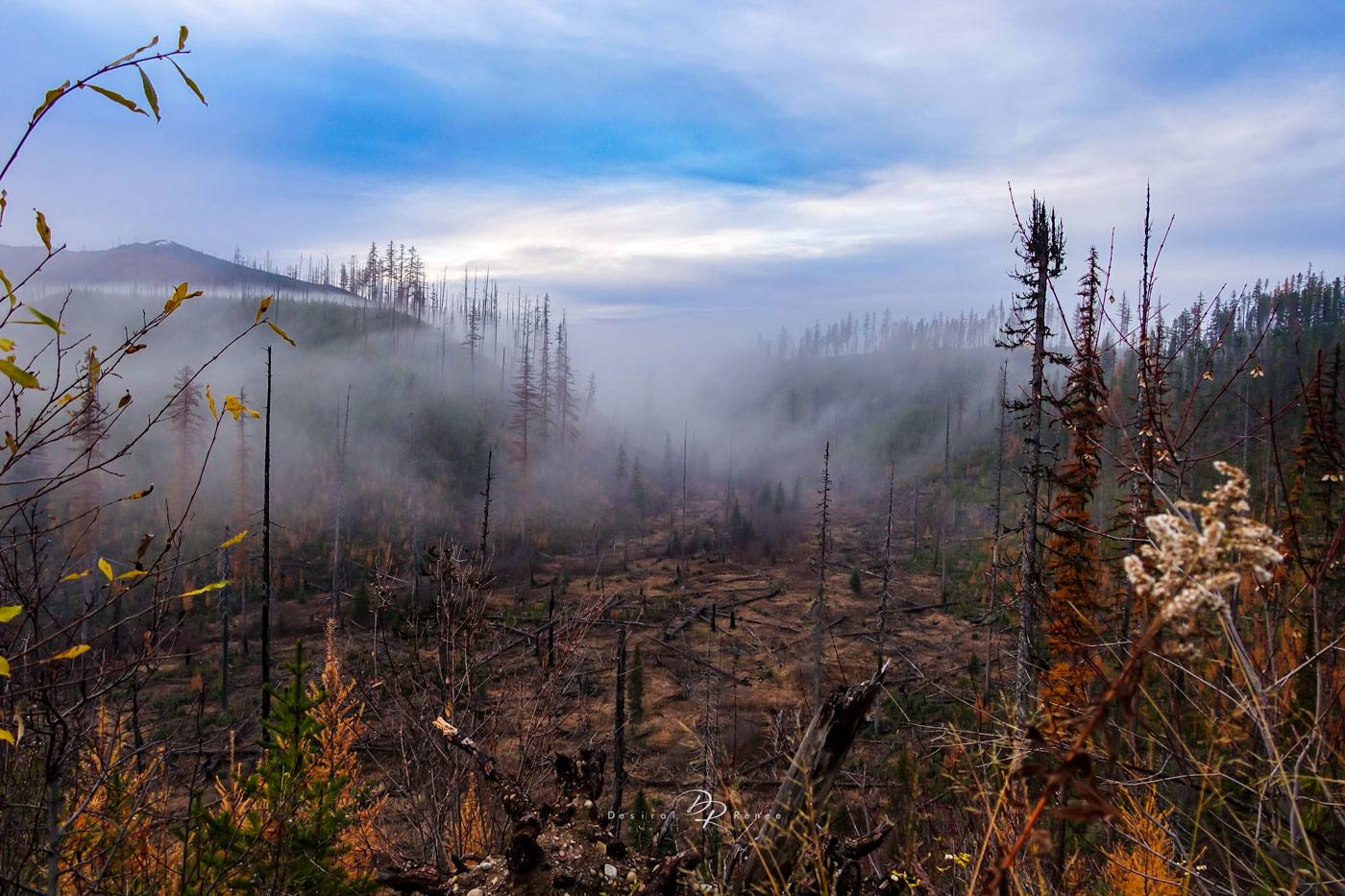 Montana, forest fire,, photo