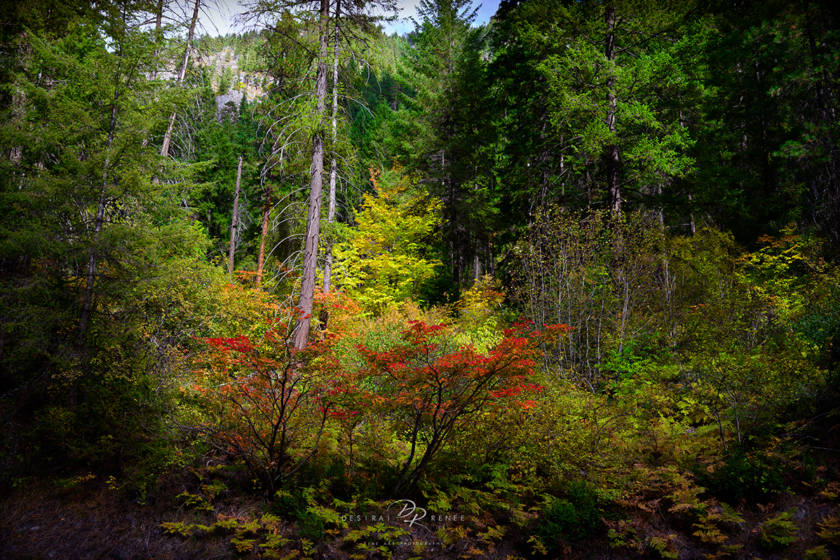 Washington, fall, fall colors, foliage, leaves, trees, mountain, forest, green, red, yellow, gold, orange,