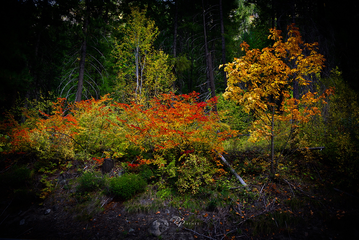 Washington, Leavenworth, fall, fall colors, red, yellow, gold, green, forest, trees, foliage