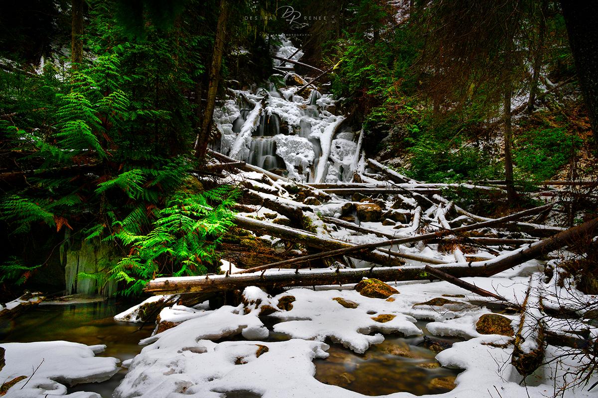 Montana, winter, photo